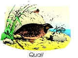 A quail (as eaten by Israelites in the Wilderness)