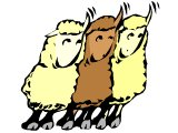 Three sheep hearing the voice of their shepherd whom they know (Jesus: I know my sheep, they know my voice)