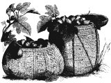 Baskets of figs