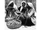 Sorting figs. The first ripe figs are the finest, but the peasants distinguish many grades. The two baskets recall those of the good and bad figs in Jeremiah`s vision (Jeremiah xxiv). An early photograph.