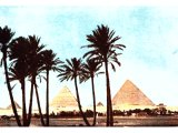 Pyramids at Gizeh seen through the feathery palms that fringe the Nile