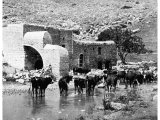 A mill near Lake Meron or the Marsh of Huleh above Lake Galilee. (A photograph by R E M Bain in about 1890)