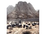 Tending the sheep of his father-in-law, Jethro, Moses brought them into the desert pastures and in due course to Mount Horeb, or Sinai. This has been identified with Jebel Musa (Mount of Moses). An early photograph.